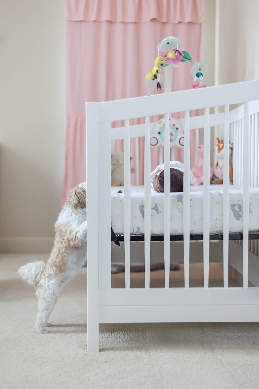 in-home newborn session in the woodlands texas with newborn and puppy