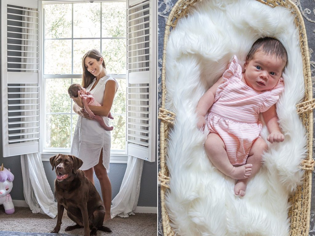 newborn and chocolate lab photographed together in newborn session by kristal bean