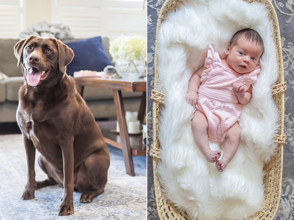 newborn baby girl and dog pose together for newborn photos by kristal bean photography